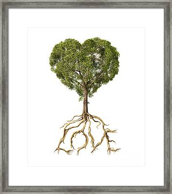 Tree With Foliage In The Shape Framed Print