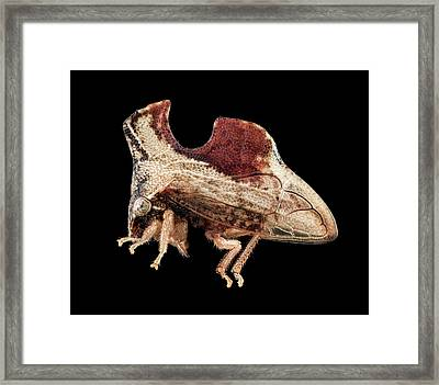 Treehopper Framed Print by Us Geological Survey