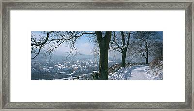 Trees Along A Snow Covered Road Framed Print by Panoramic Images