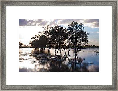 Trees And Flooded Creek Framed Print