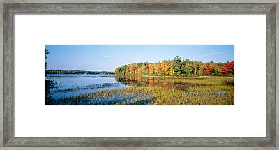 Trees In A Forest At The Lakeside Framed Print by Panoramic Images