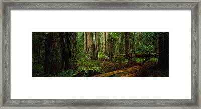 Trees In A Forest, Hoh Rainforest Framed Print