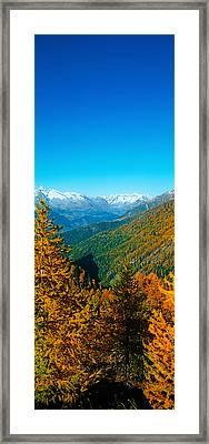 Trees In Autumn At Simplon Pass, Valais Framed Print