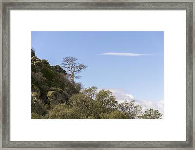 Trees In The Mountains Framed Print
