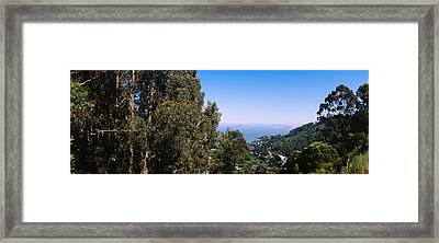 Trees On A Hill, Sausalito, San Framed Print