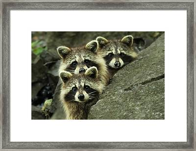 Tres Banditos Framed Print by Mircea Costina