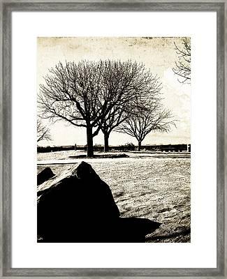 Tres Trees Framed Print by Gilbert Artiaga