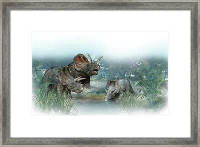 Triceratops Old And Young Framed Print