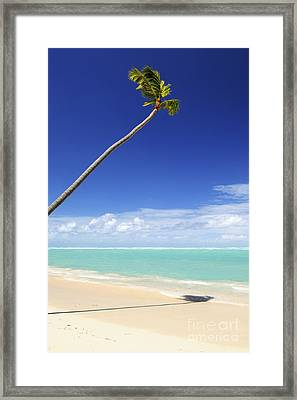 Tropical Beach And Palm Tree Framed Print by Elena Elisseeva