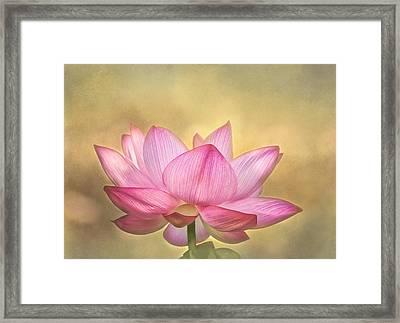 Tropical Lotus Flower Framed Print
