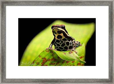 Tropical Poison Arrow Frog Framed Print by Dirk Ercken