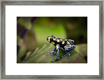 Tropical Poison Dart Frog Framed Print by Dirk Ercken