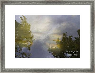 Tropical Reflections Framed Print by Anne Rodkin
