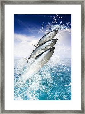 Tropical Sea Escape Framed Print by Jorgo Photography - Wall Art Gallery