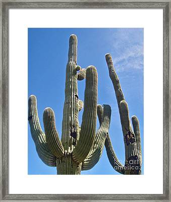 Tucson Arizona Cactus Framed Print by Gregory Dyer