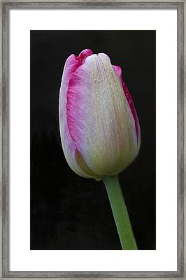 Tulip Bright Framed Print