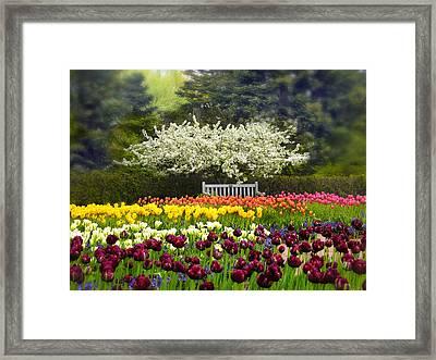 Tulip Garden Framed Print by Jessica Jenney