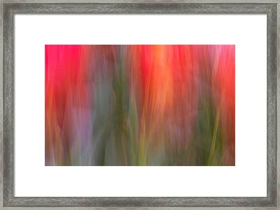 Tulip Waves Framed Print
