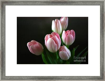 Tulips On Display Framed Print by Cathy Dee Janes
