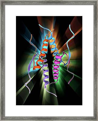 Tumour Suppressor Protein Molecular Model Framed Print