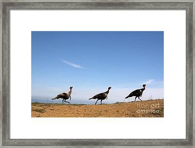 Turkey Stroll Framed Print by Juan Romagosa