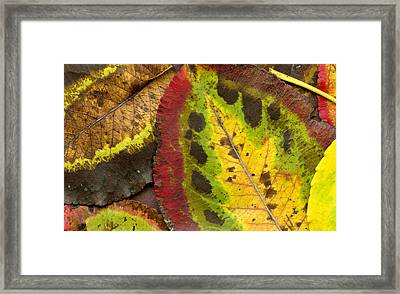 Turning Leaves Framed Print by Stephen Anderson