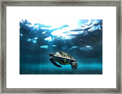 Turtle Rays Framed Print by Sean Davey