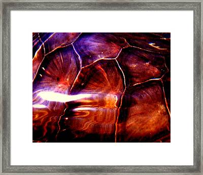 Turtle Shell Framed Print