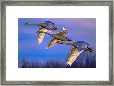 Twilight Flight Framed Print by Brian Stevens