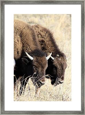 Twins Framed Print by Rick Rauzi