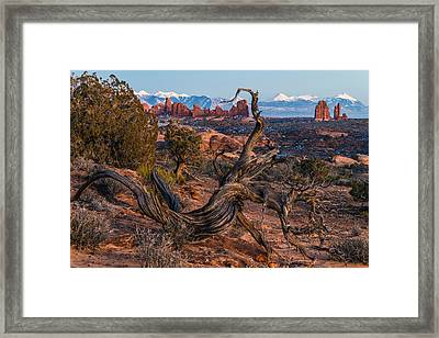 Twisted Desert Framed Print by Dustin  LeFevre