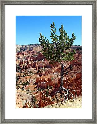 Framed Print featuring the photograph Twisted by Jemmy Archer