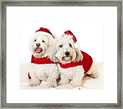 Two Cute Dogs In Santa Outfits Framed Print
