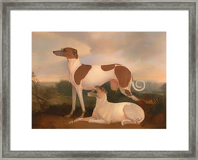 Two Greyhounds In A Landscape Framed Print