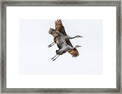 Two Sandhill Cranes Framed Print