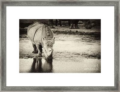 Two White Rhinos  Framed Print