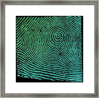 Typical Whorl Pattern 1900 Framed Print by Science Source