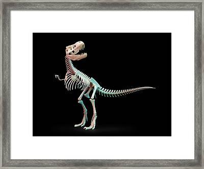 Tyrannosaurus Rex Skeleton Framed Print