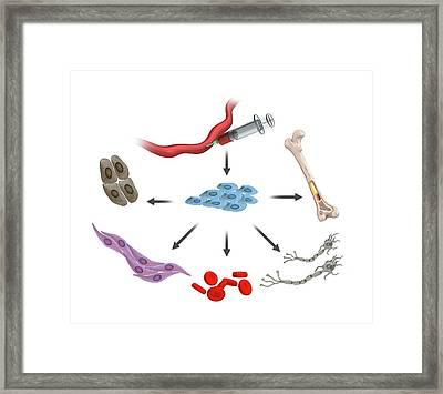 Umbilical Stem Cells Framed Print by Mikkel Juul Jensen