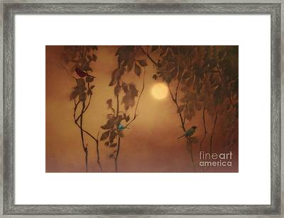 Uncommon Friends Framed Print by Tom York Images