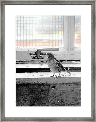 Under Arrest Framed Print by Munir Alawi