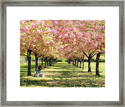 Framed Print featuring the photograph Under The Cherry Blossom Trees by Nina Bradica