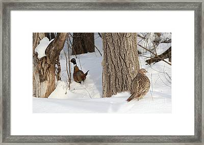 Undercover Framed Print by Lori Tordsen