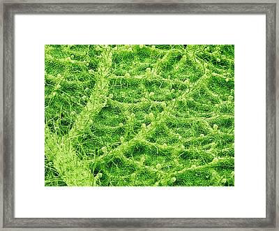 Underside Of A Leaf Framed Print by Susumu Nishinaga