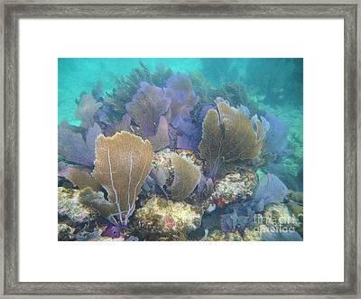 Underwater Fans Framed Print by Adam Jewell