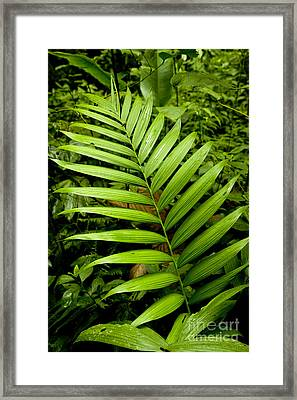Untitled Flora Framed Print by Thomas Levine