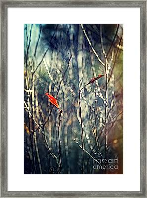 Untitled Framed Print by HD Connelly