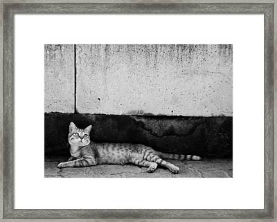 Framed Print featuring the photograph Untitled by Laura Melis