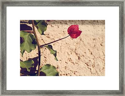 Untitled Framed Print by Laurie Search