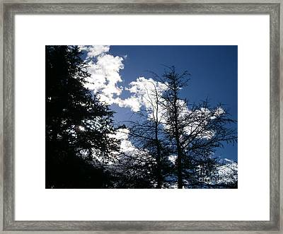 Untitled Photo 8 Framed Print by Drew Shourd